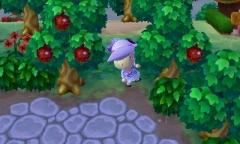 Wer hat meine Äpfel geklaut?! ò.ó
