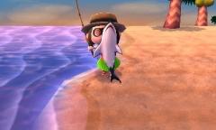 Endlich wieder ein Hai