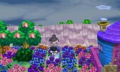 Blumen schlummer Paradies