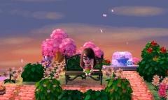 Die Kirschblüte genießen