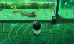Starbays Tropenfische