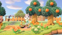 Picknick mit frischem Orangensaft
