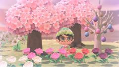 Kirschblüten genießen