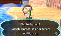 Seebarsch/Lumina