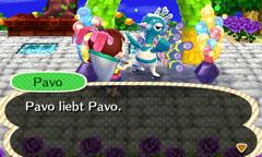 Pavo / Azuria
